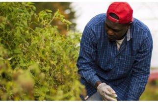 Más de 17.000 productores se han beneficiado con proyecto 'Coseche y Venda a la Fija'