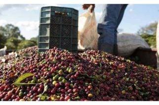 MinAgricultura resalta crecimiento en producción de café y en exportaciones durante los primeros meses de 2019