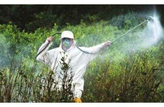 Realizan jornada de fumigación en Lorica