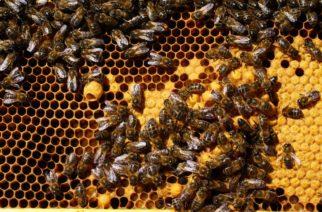 Pesticidas serían los causantes de mortandad de abejas en Tierralta
