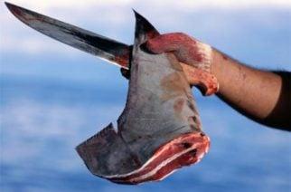 Ministerio de Agricultura firmó resolución para volver a cazar tiburones
