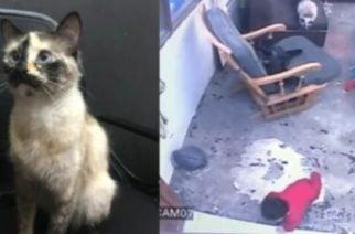 Viral: Un gato evita que un bebé caiga por unas escaleras