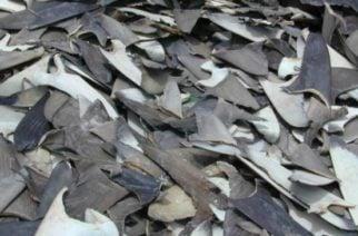 La polémica que creó MinAgricultura con la firma de la resolución de cupo de pesca de tiburón en Colombia