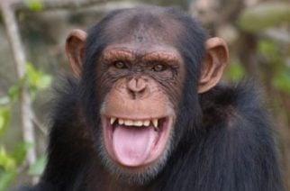 Hoy es Día Internacional del Mono
