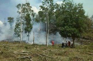 Incendios forestales ponen en alerta roja a 17 municipio de Córdoba, según el IDEAM